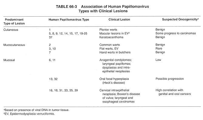 Cervical Cancer Significance Of Hpv 16 18: Human Papilloma Virus (HPV)