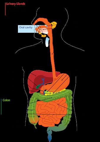 Crohn S Disease Granulomatous Colitis Or Regional Enteritis